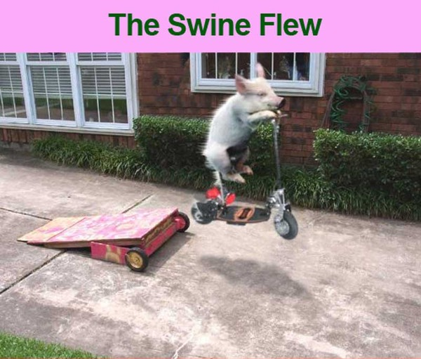 "Swine ""Flew"""